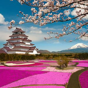 365 WONDERS OF THE WORLD: #142  The vibrantly hillside of Takinoue Park, Japan is the highlight of Spring. The entire park is covered with a bright pink carpet of moss phlox flowers  Read more>> http://www.travelstart.co.za/lp/sapporo/flights  #365wondersoftheworld #travelstart #Japan #asia