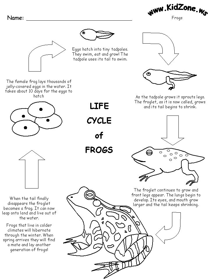 23 Best Frog Life Cycle Images On Pinterest Frogs Frog Life