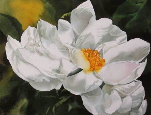 """A painting a day # 12 """" white peony"""""""