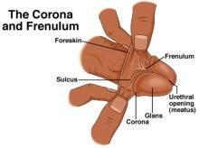 1000 images about adventures in intactivism whether you like it  : frenulum diagram - findchart.co