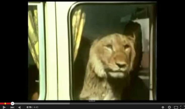 La storia del leone Christian