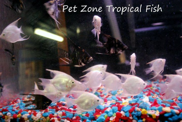 How To Know Which Fish To Put Together In A Community Fish Tank?