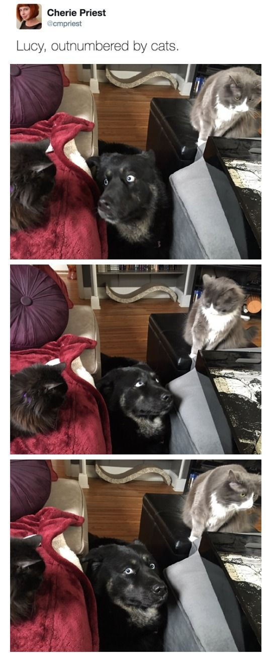 Haha...Trapped. This looks almost exactly like our cats Sadie and Patches, and our dog Kasha.