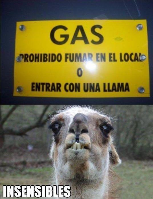 Jajajaja #humor #funny
