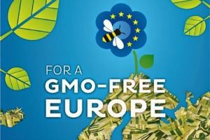 New legislation to allow EU member states to restrict or ban the cultivation of crops containing genetically modified organisms (GMOs) on their own territory, even if this is allowed at EU level, was passed by MEPs on Tuesday.