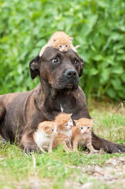 Dog and kittens. The expression on the dog's face!!
