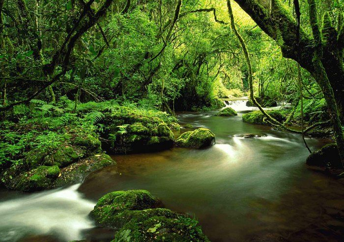 pictures of the knysna forest,