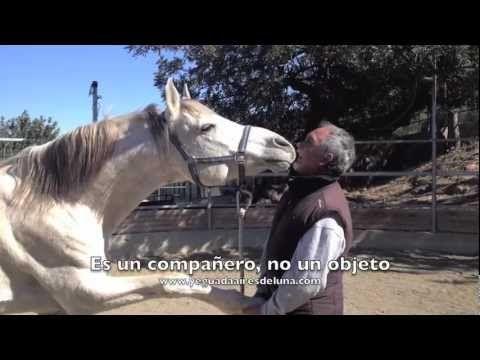 Calidad de vida: bienestar equino y doma natural