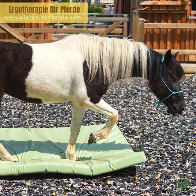 Ergotherapie Fur Pferde Basissinne Schulen Koordination Und