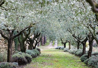Clos Pascal, Vesian Garden in France Photographed by Clive Nichols.