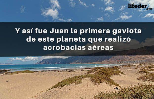 Las Mejores Frases de Juan Salvador Gaviota [con Imágenes