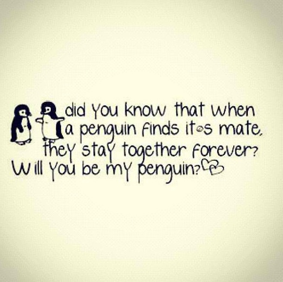 I have found my penguin