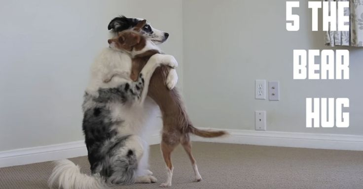 Adorable dogs demonstrate different types of hugs you can try out for Valentine's Day.