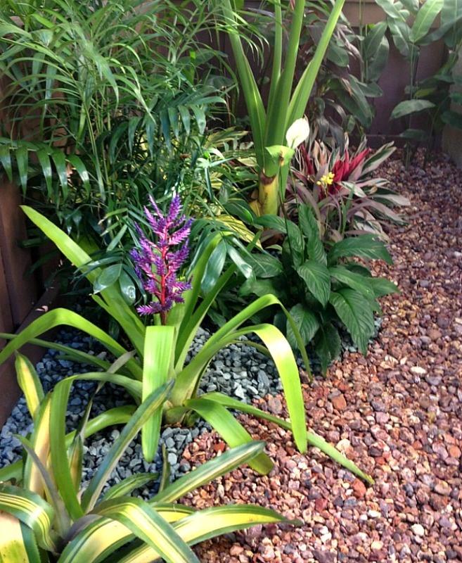 South Florida Tropical Landscape Ideas Planter Container: Shade Corner Of My South Florida Garden