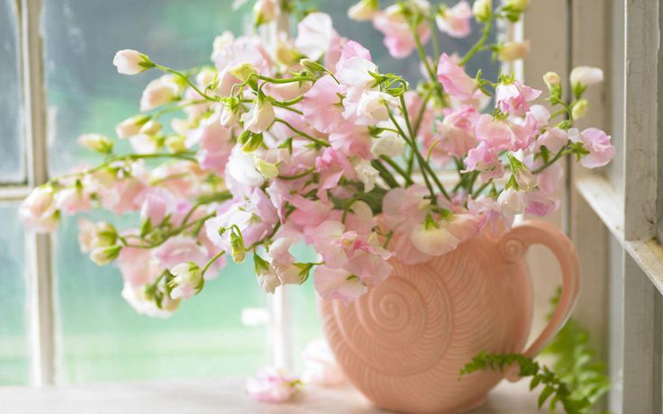 Pink Sweet Peas 1080p Flowers Hd Wallpaper For Desktop