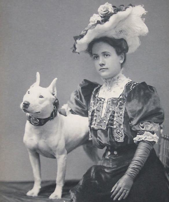 The Sporting Bull Terrier Vintage Dog Books Breed Classic ...  |American Pit Bull Terrier Vintage