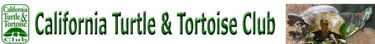 Here is a cool list of plants edible by tortoises.