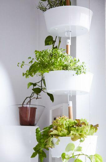 Udstil planter i ampler