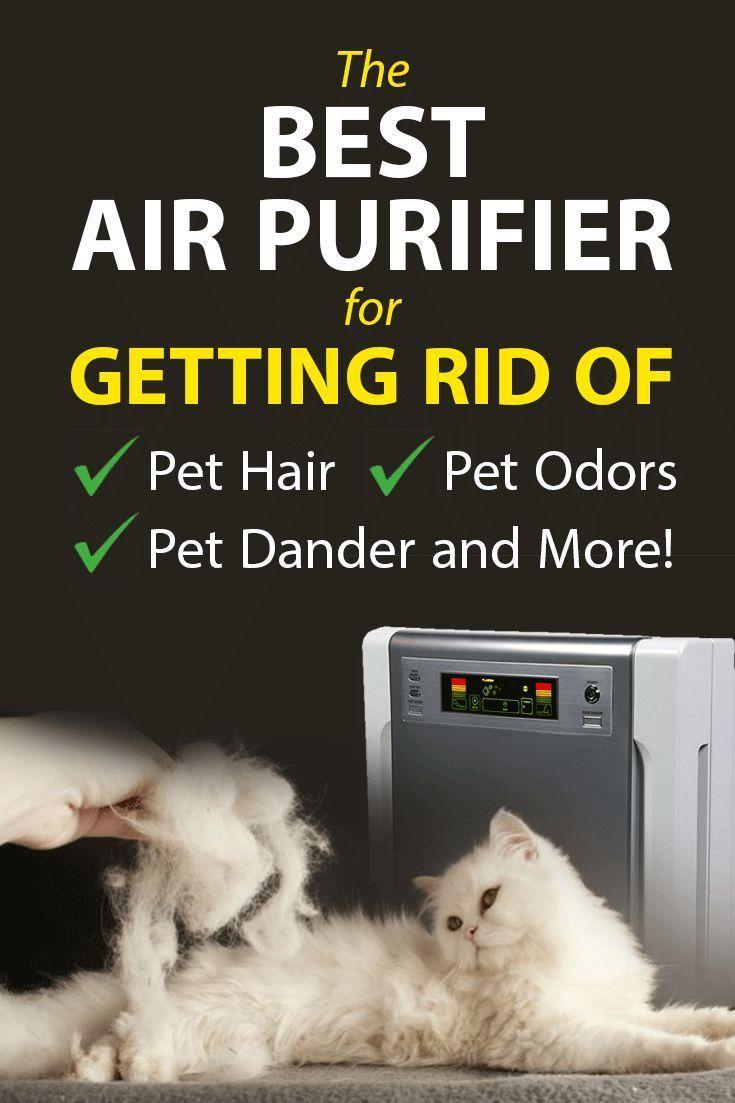 Best Air Purifier For Pets Allergies Dander Hair Odors Air
