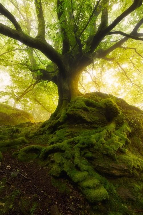 superbnature:THE QUEEN AND THE SNAKE by Maik_Elyk http://ift.tt/1osbm8t  Gorgeous capture of a strong root system. Contribute to our ROOTS issue now!