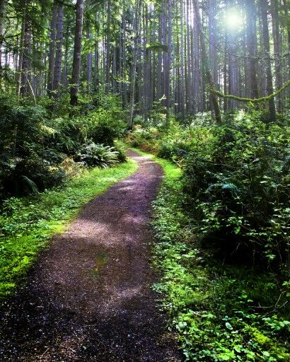 Trails at Fisher pond. Vashon island.