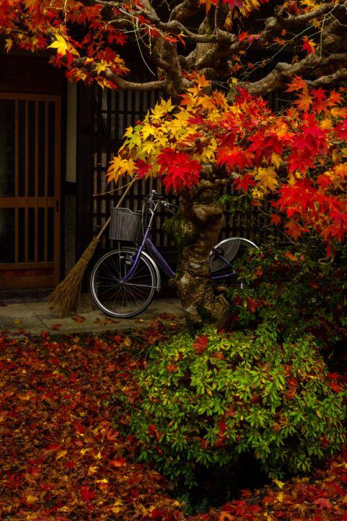 gezzaseyes: A vassoura ea bicicleta
