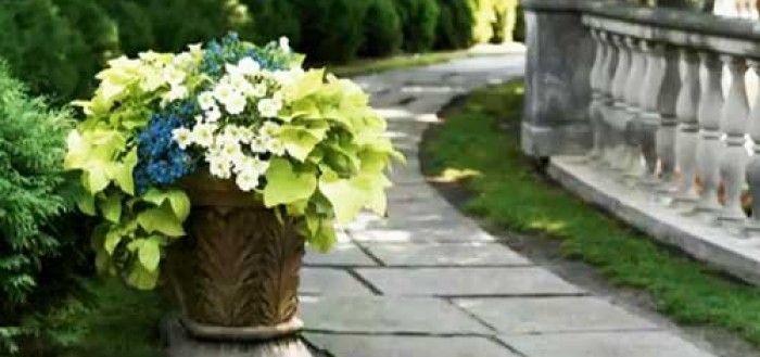Какие цветы хорошо растут в тени. #цветы #цветник #клумбы #сад