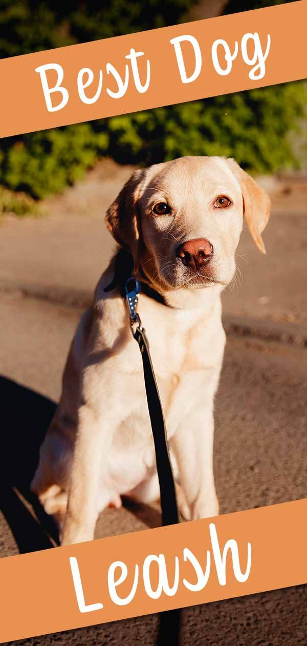 Best Dog Leash Reviews And Tips For Choosing Your Dog S Leash Dog Leash Dogs Dog Leads Leash