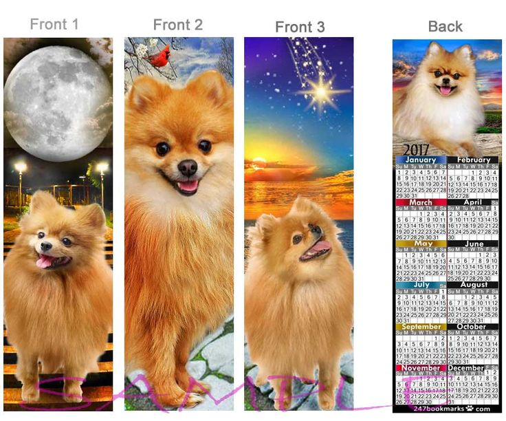 3 Lot/Set POMERANIAN Calendar 2017 BOOKMARK -  Fawn/Tan & Black Dog Lover puppy Pomeranians Art mini poster Book Card figurine-Perfect Gift by RobbiesCreations on Etsy