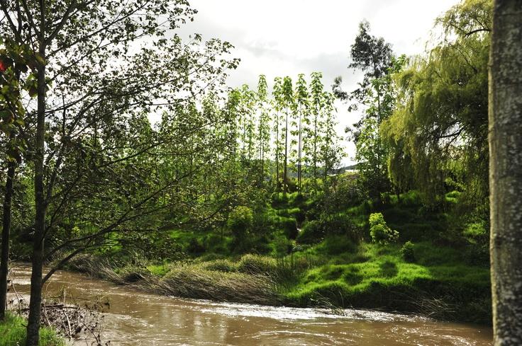 Puedes acompañarnos al Río Bogotá y sembrar tu árbol adoptado, pero muévete #AdoptaUnArbol en www.adoptaunarbol.co