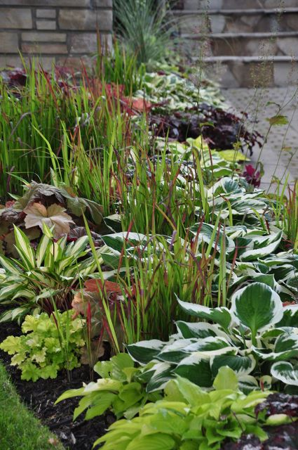 a garden in the shade, container gardening, flowers, gardening, landscape, outdoor living, succulents, Along the driveway there is a bit more sunlight and she has added Japanese Blood Grass into the mix Warning Before you add Japanese Blood Grass to your wish list for spring be aware that it can be a bit invasive