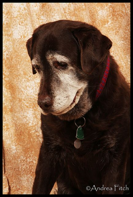 old dogs are the best dogs, and make a family complete. Love them to the end