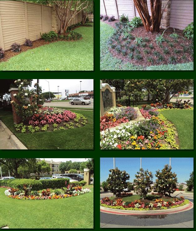 Dwarf Grasses Landscaping 107 best mondo grass images on pinterest landscaping gardening love the dwarf mondo grass landscaping workwithnaturefo