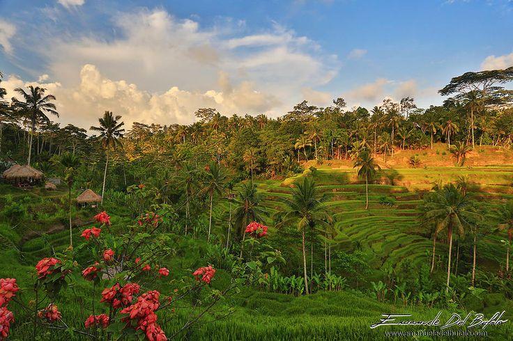emanueledelbufalo | - Bali