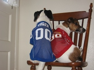 A pack divided--go Colts and Redskins!
