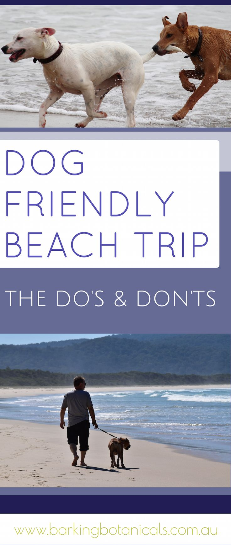 If you are planning to take your dog for a trip to a dog friendly beach, here are some helpful do's and don'ts to help keep your dog safe, healthy and happy at the beach.
