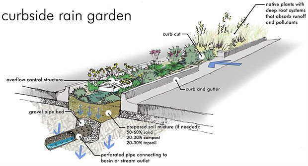 07 Rain garden stradale, dettaglio. By Eagle Creek Watershed Alliance (USA)
