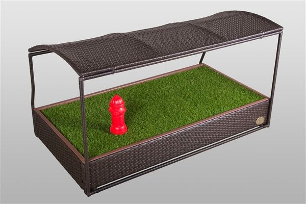 Growing Grass On Apartment Balcony