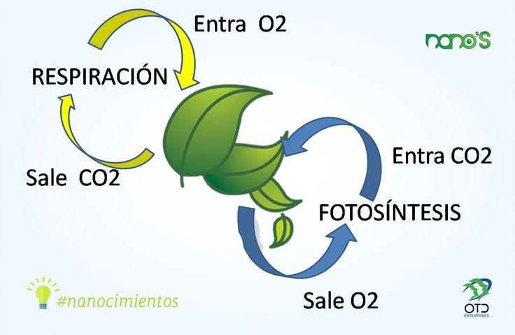 Nanocimientos fotos ntesis es el proceso qu mico que for Procesos quimicos en la cocina