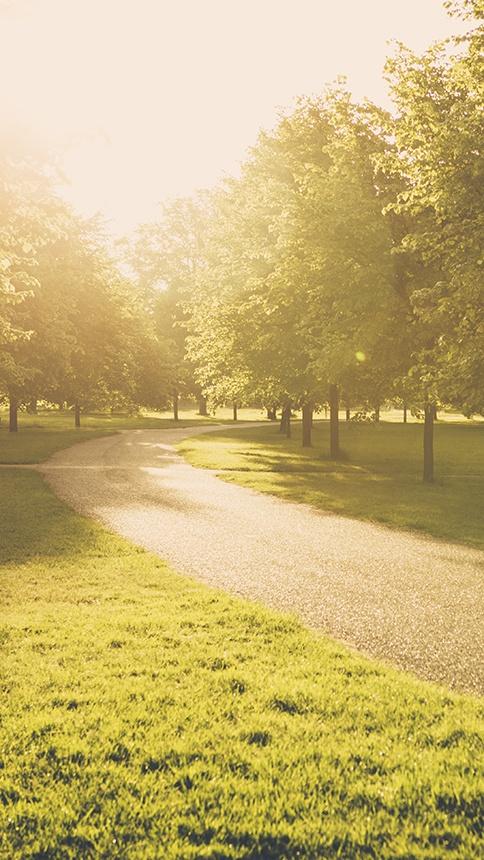 Warm morning light illuminates London's Hyde Park