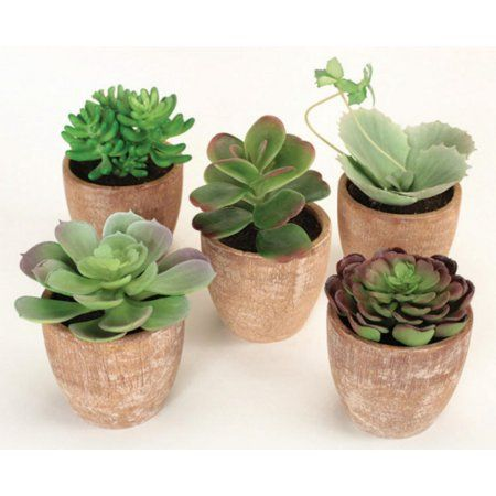 Pack of 10 Southwestern Mixed Green Succulent Plants in Terracotta Pots 7.5""