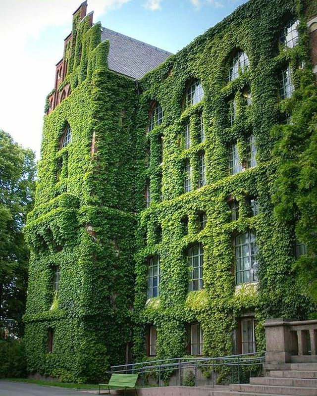 #JetVillaLife  Ivy covered library at Lund University in Sweden. Would you go inside? ●○● Double Tap ●○● ■□■ Make sure you hashtag your travel pics with JetVillaLife for a chance to be featured. ■□■ #Sweden #Library #University #Travel #Wanderlust