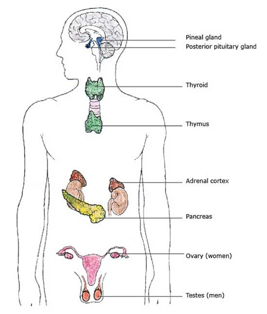 endocrine system  this site is a great source of