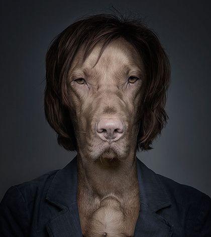 Underdogs: zo baasje, zo hond