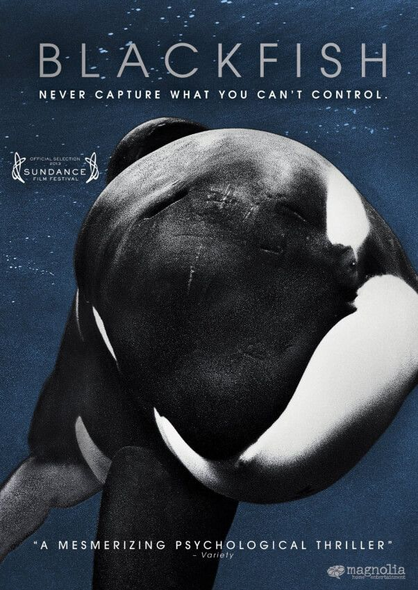Blackfish is a captivating and enthralling watch. I loved how much research and effort went into making this documentary. The only criticism I have is that i think it shouldn't have been so one sided, although I can understand why, this is very much a passion project. 8/10
