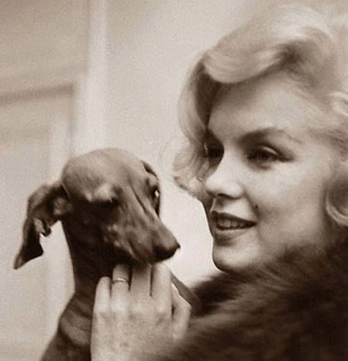 Dogs never bite me - just humans. ~ Marilyn Monroe                                                                                                                           If this were not a true statement...