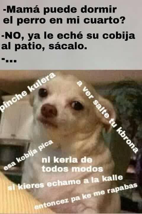 Lo siento ma' por lo de culer@ pero... Pobre :(