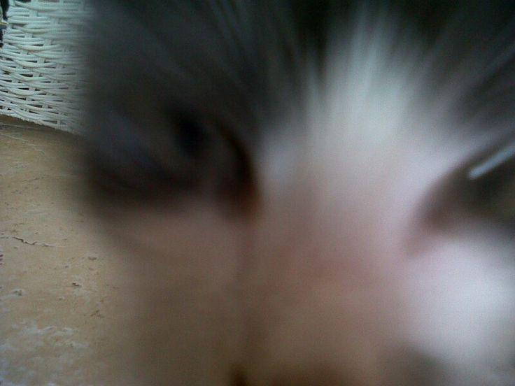 Boooo! #peekaboo #haha #lol #justforlaughs #giggles #selfie #kittycorner #lovemykitten #fatcat #iloveyou