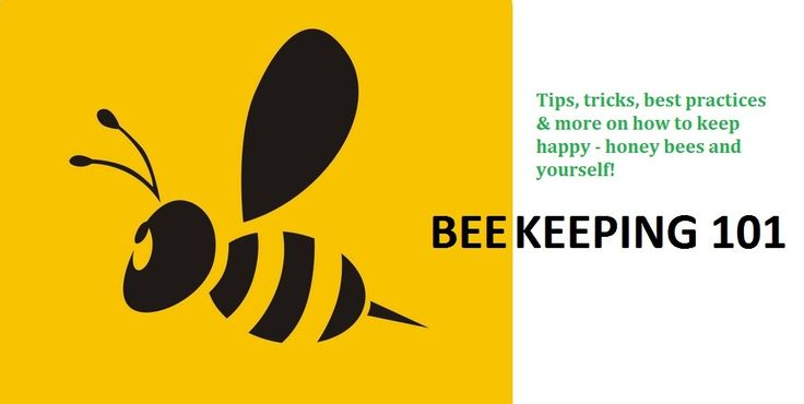 how to raise bees
