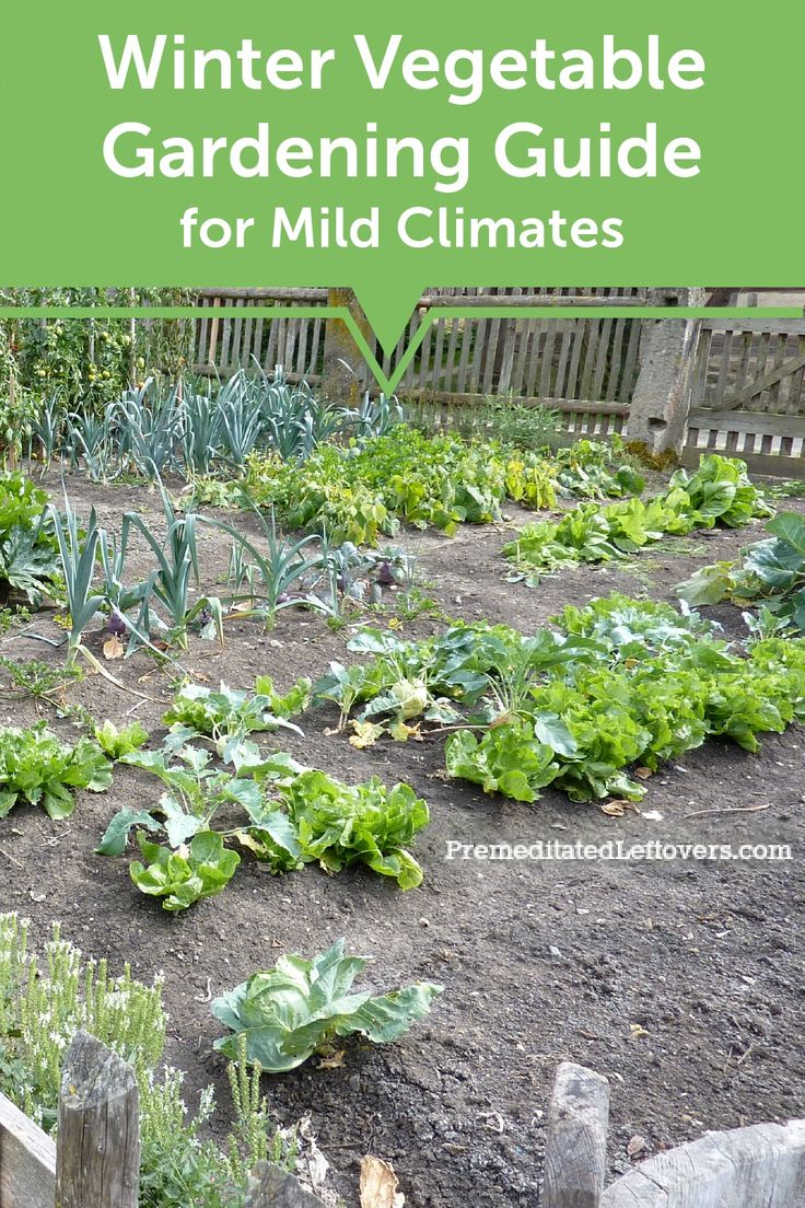 Best 25 winter vegetable gardening ideas on pinterest - When to fertilize vegetable garden ...